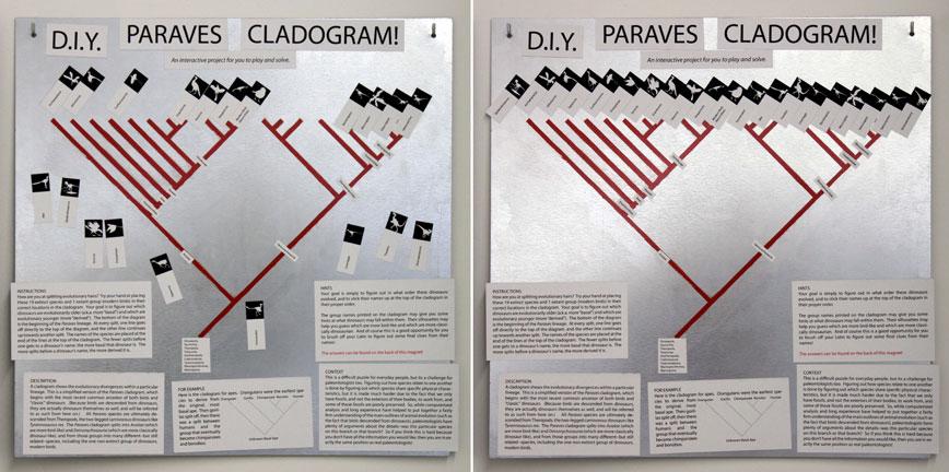 cladogram-both