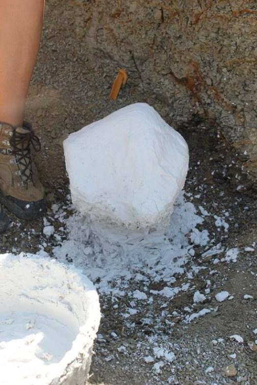 plasteredfossil
