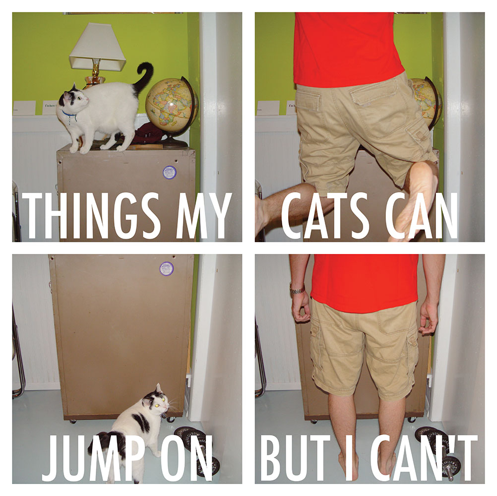 cat jumps 2